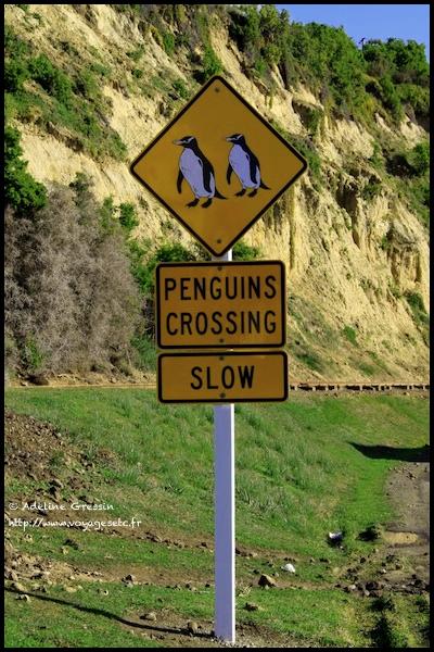 signalisation-routire-attention-pingouins-nouvelle-zelande